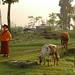 Tending Animals - Lake Khecheopalri, Sikkim