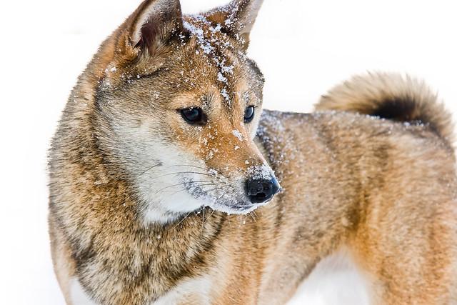 Kiba's Snow Day