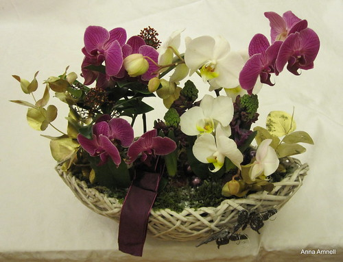 Christmas orchids 2