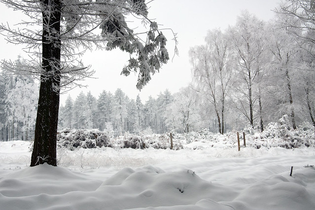 Haldon Forest in Snow 1