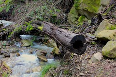 Upper Falls of Swanson Creek
