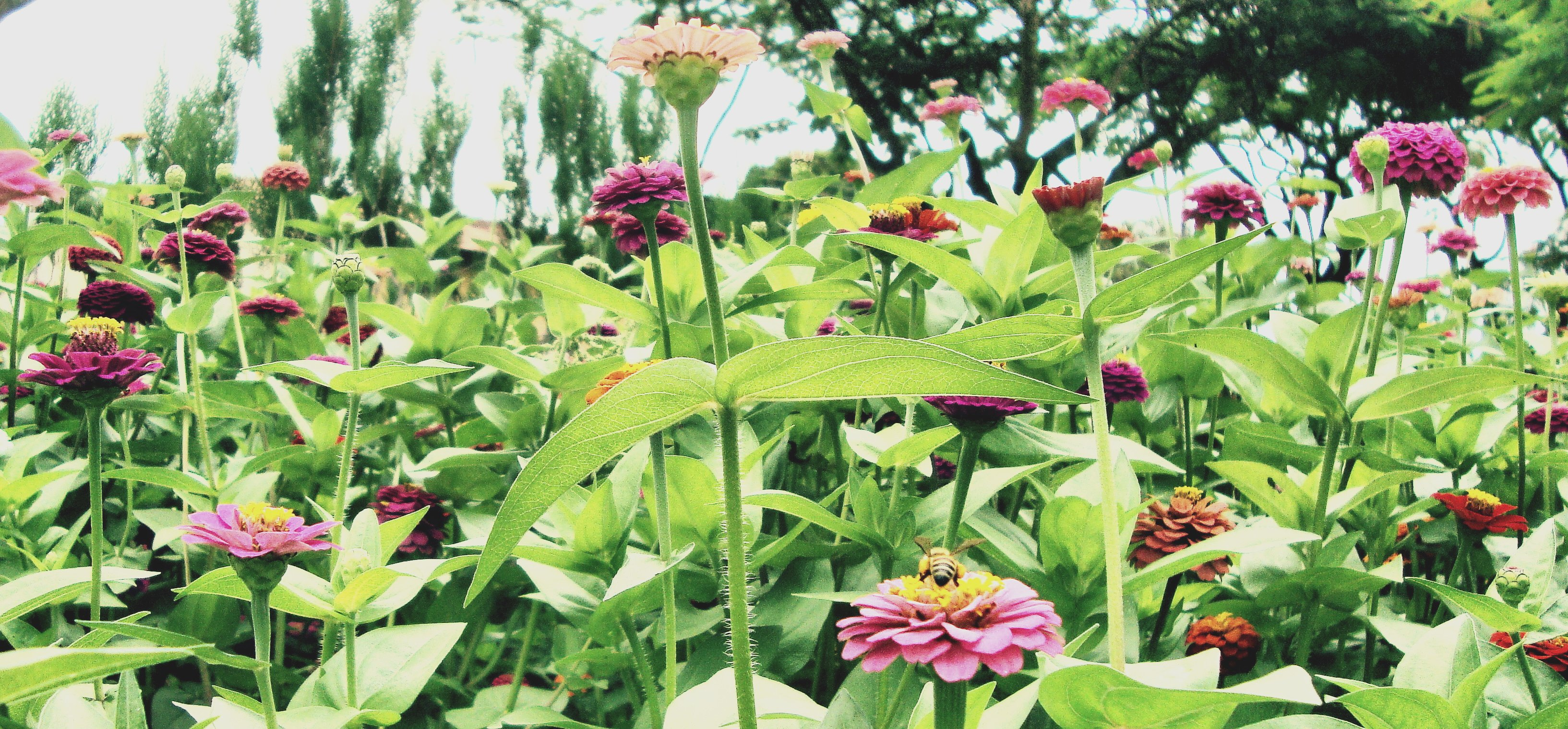 Phonetic fertilizer
