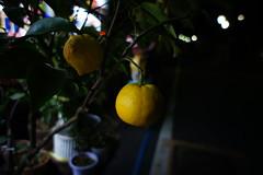 Night fruit