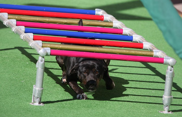 how to build a obstacle course for dog