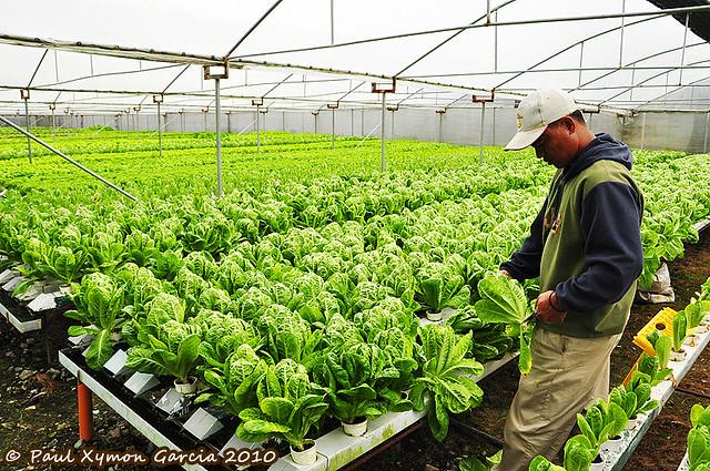 Vegetable Farm, Buguias, Benguet