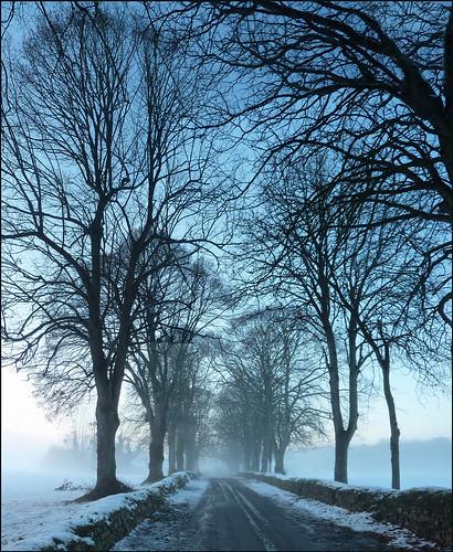 trees winter sunset mist snow france 22 evening brittany europe path entrance bretagne breizh arbres neige soir beech brume entrée allée côtesdarmor aodoùanarvor boisgelin argoat hêtres colorphotoaward pléhédel coatguelen legoëlo brogoueloù nadcoz