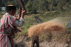 Sun, 23/11/2008 - 14:13 - Traditional farming practices, Eastern Himalayas, India