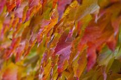Memories of Autumn in France