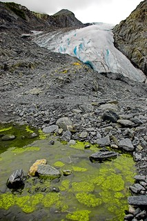 Algal Blooms in front of Worthington Glacier