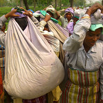Heavy Loads of Tea - West Bengal, India