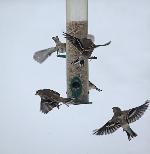finch bird feeders