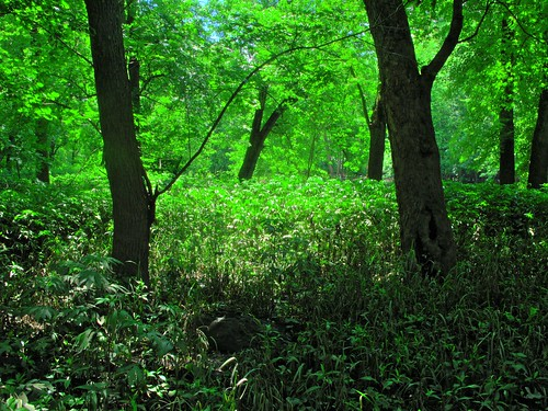 plant color tree green forest illinois central vivid il champaign hdr lakeofthewoods