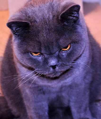 1000+ images about Seriously Annoyed Kitty on Pinterest ...