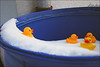 <p>Die Quietscheentchen haben auch im Winter ihren Badespaß ;-)<br /> <br /> the rubber duckies enjoy their swimming pool even in winter ;-)</p>
