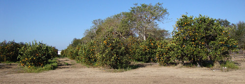 florida landscapes floridaoranges desotocounty fl northamerica unitedstates us