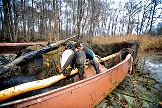 summer ducks in canoe