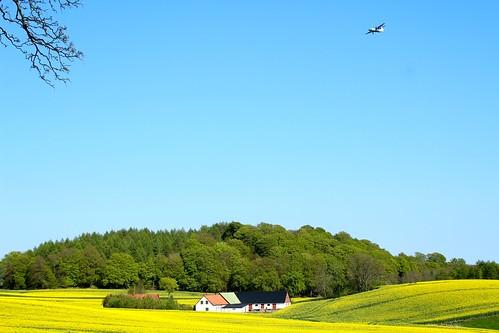 sky field yellow forest spring sweden farm aircraft tracks fav20 fav30 raps skåne rapeseed flygplan fav10 vår fält
