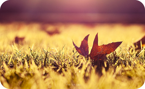 light sunset grass 50mm golden leaf bokeh hour f18 d300s