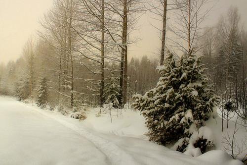 winter snow landscape track snowy path top photographers trail showroom soe tistheseason potofgold blueribbonwinner finegold thegalaxy wintrylandscape brigettes magicunicornverybest magicunicornmasterpiece mygearandme mygearandmepremium mygearandmebronze mygearandmesilver mygearandmegold poppyawards vigilantphotographersunite vpu2 vpu3 vpu4 vpu5 vpu6 vpu7 vpu8 vpu9 vpu10