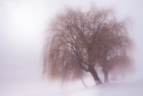 morning trees winter mist snow cold fog sunrise canon landscape longbranches outstandingromanianphotographers