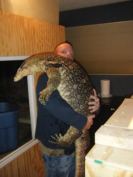 8.5 foot Sumatran water monitor raised by J. Heck | Flickr ...