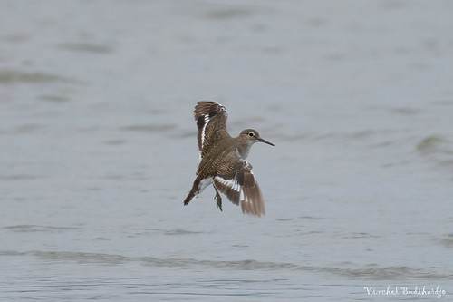 malaysia mersing outdoor nature wildlife animal bird fuji xt2 100400mm