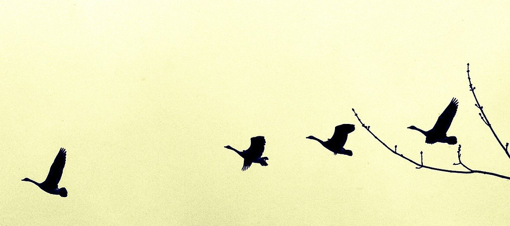 Flight #Iris #CameraBag #Iphoneography