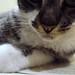 minha gata Cherrie