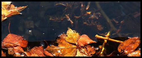 Sobre el agua / Over the water