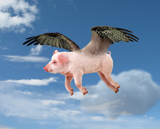 When Pigs Fly | Flickr - Photo Sharing!
