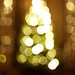 Tree Bokeh by garrettmurray