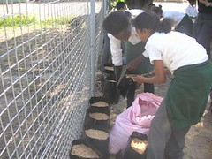 GCU Academy - Filling the containers :: The Backpack Cape Town posted a photo: 	   During 2010, The Backpack arranged to have a food tent built at Woodlands Primary School in Heideveld, where the GCU Academy operates from.  The vegetables are used to make meals for the kids at school and eventually the kids will be able to take some home as well.