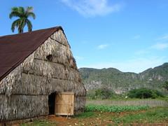 Tobacco Curing Hut - Near Viñales - Cuba