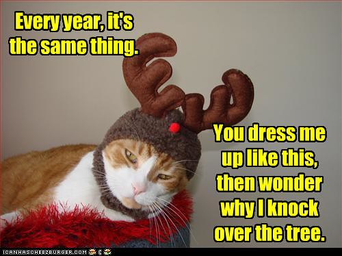 funny-pictures-cat-is-dressed-as-reindeer