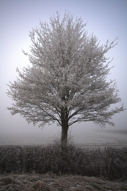 Little Frosty Tree
