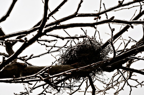 frozen nest 52/3 'shades of grey'