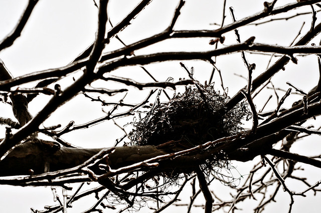 frozen nest 52/3 grey