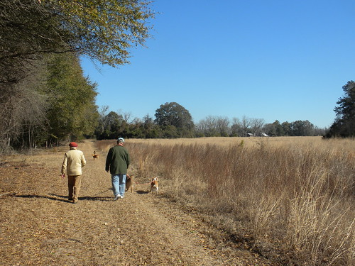 outing walk country rural orangeburg rowesville farm field barns sheds roof dogs winter chilly sunny bright blue sky january meadow memory clear chill cold exercise southern tree grass quercus oak andropogon poaceae