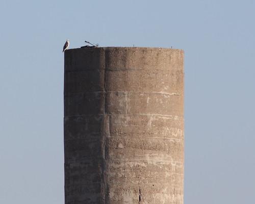 bird birds canon illinois midwest wildlife troy birdofprey redtailhawk stjacob rebelxs raptort eos1000d