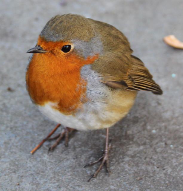 Robin Goch