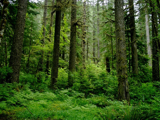 SCoastal Temperate Rainforest in Drift Creek, Oregon
