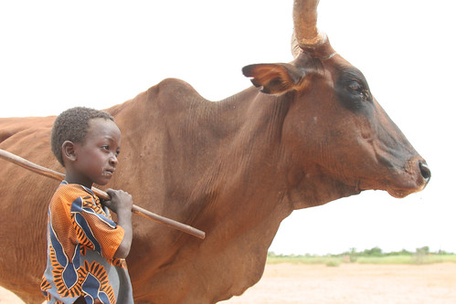 Boy and cow in Niger