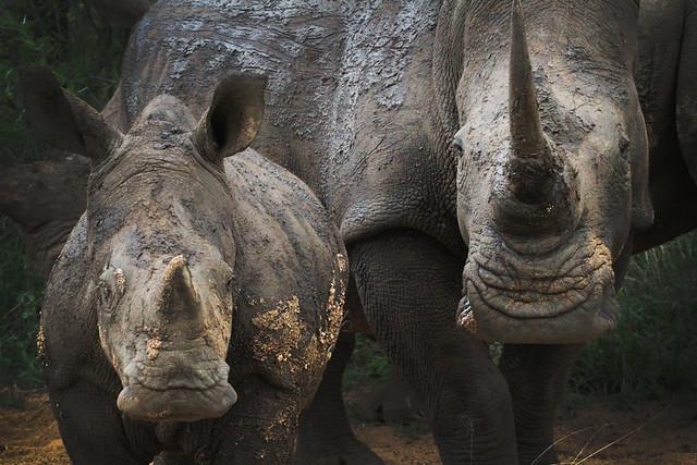 Africa Safari 005