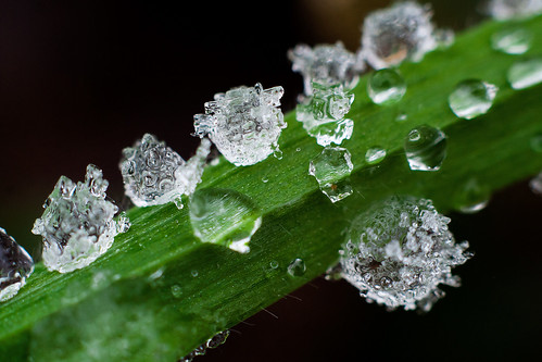 Frozen Drops