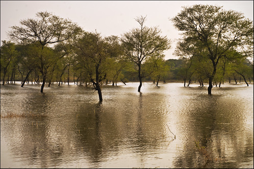 longexposure karnataka nationalhighway nh7 rainwatercollection nikond80 paragodu shimmeringwaters rajeshvijayarajan rajeshvijayarajanphotography rajeshvj partiallysubmergedtrees chitravathidam lakeparagodu gettyimagesindiaq4