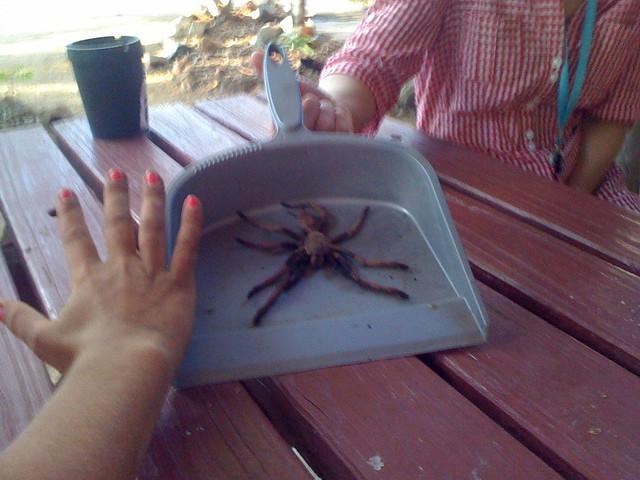 Man eating spider #MattToAus | Flickr - Photo Sharing!