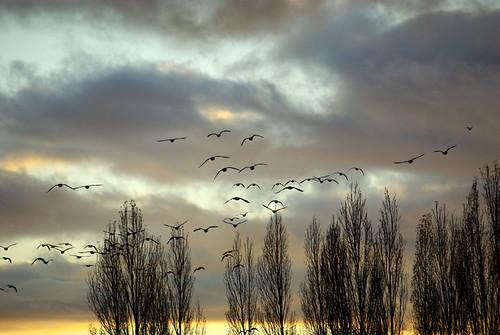 trees light sunset tree alberi clouds grey grigio sweden gull gray himmel goose sverige bye luce träd guld lightblue solnedgång moln adjö ljusblå ljusblått grågäss
