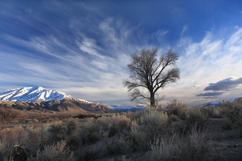 california blue sunset sky snow tree nature clouds canon landscape bishop mountians lonetree easternsierras inyocounty