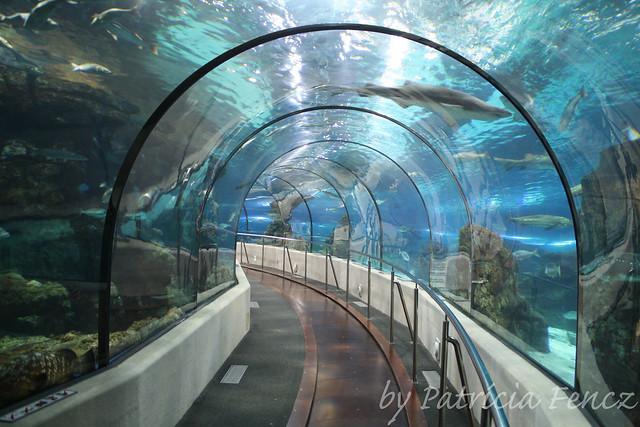 L 39 aqu rium de barcelona flickr photo sharing for Aquarium de barcelona