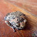 Spotty Little Frog Friend - Koh Samui, Thailand